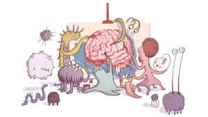 gut health and brain function